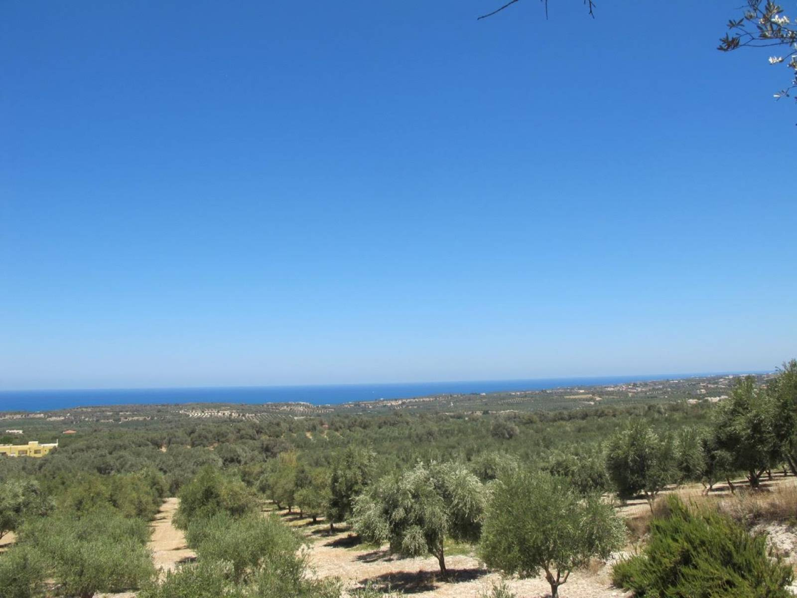 Plot with olive trees and sea view